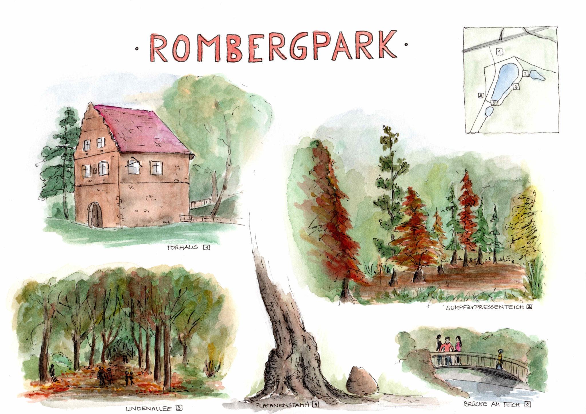 Rombergpark - Dagmar Knappe